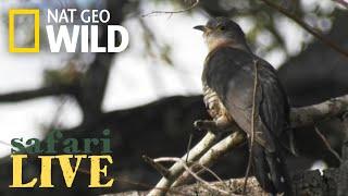 Safari Live - Day 48 | Nat Geo WILD