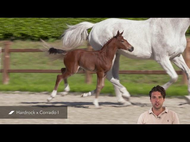 Honesty van CH (Hardrock x Corrado I)