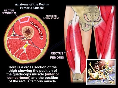 Kurcze mięśni uda wewnętrzne