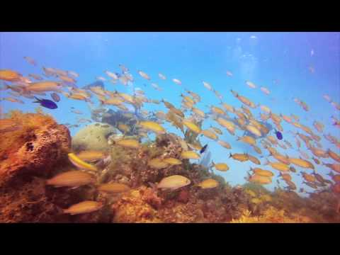 Wreck and reef, Scubacaribe Ocho Rios,Jamaika
