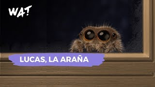 Lucas, la araña que hará que les pierdas el asco
