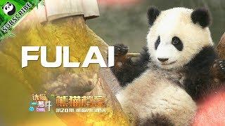 【Panda Scanning】Ep10 Do You Know Fu Lai, The Younger Sister Of Fu Shun?  | iPanda