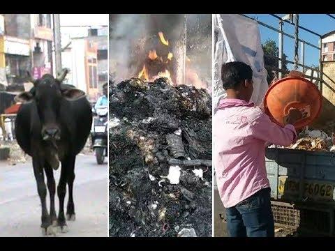 जनावरे रस्त्यावर, कोंडवाड्यात कचरा, तोही जाळला, कचरा जाळणे सर्रास