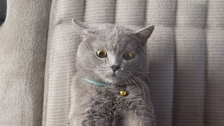 The Ultimate Viral Cat Video - Video Youtube