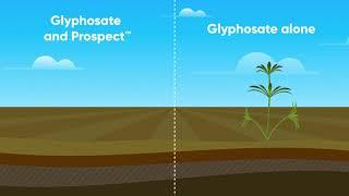 Prospect Herbicide Video