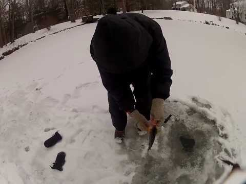Pond Ice Fishing: Big Perch