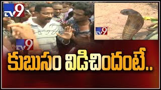 Snake in Durgada : Devotees vs Forest department officials - TV9