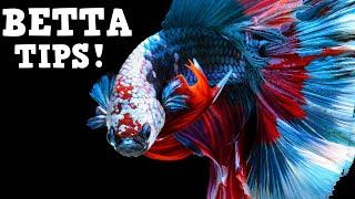 Top Tips For Keeping A HEALTHY Betta Fish! Beginner Betta Techniques
