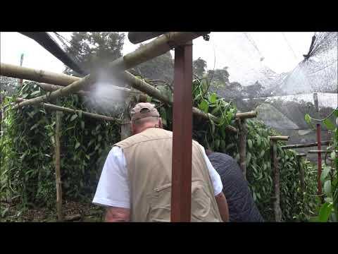 Ökologischer Anbau von Vanille in Mexiko in der Region Papantla, Veracruz