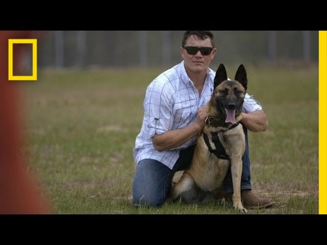 This Badass K9 was Shot 4 Times With an AK-47. She Still Took Down the Attackers