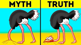 Ostriches Don't Really Hide Their Heads and 42 Facts Over Myths