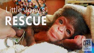 Chimp Little Joey's RESCUE