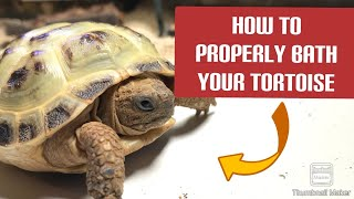 How to BATH a TORTOISE