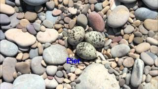 preview picture of video 'Parc Natural del Prat de Cabanes-Torreblanca Costa del Azahar Castellón'