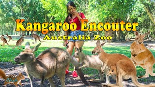 A Day With A Kangaroo Australia Zoo