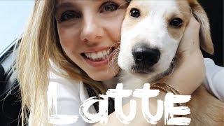 Hayatımıza Hoşgeldin LATTE! | Köpek Sahiplendik | İrem Akdemir