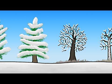 Jak stromy přežívají zimu?