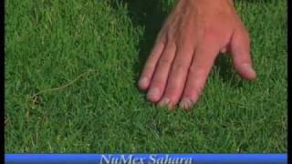 How To Grow Bermudagrass