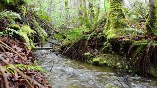 Spring-Time , Spring-Water Meditation