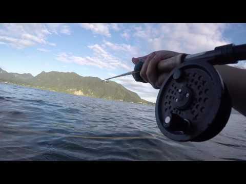 Hashish in una nutrizione su su pesca
