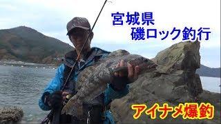 アイナメ爆釣!宮城県石巻磯ロック釣行