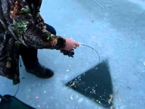 La pesca su etichette invernali di video