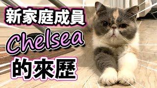 新家庭成員Chelsea的來歷。