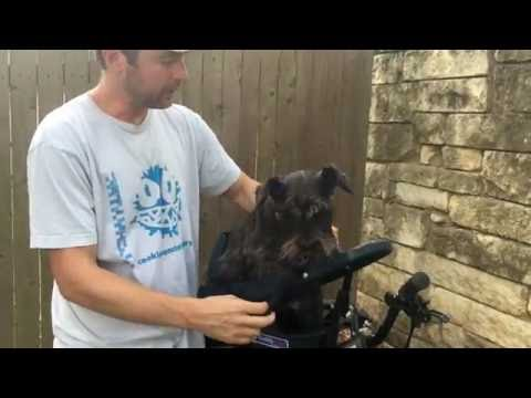 Buddyrider™ Dog Bike Seat Harness Adjustment