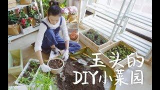 DIY一个自己的小菜园