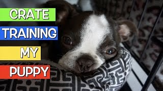 How to Start Crate Training your Puppy