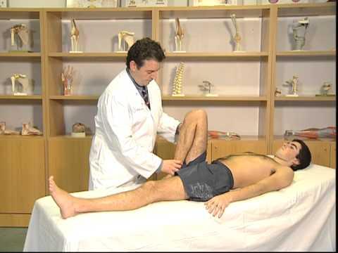 Ligamentoz el ligamento de la rodilla ligamentos se