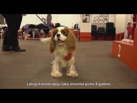 Собаки лечат людей