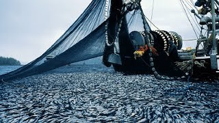 Unbelievable The Most Advance Fishing Vessel - Big Catch Hundreds Tons Fish With Modern Big Boat
