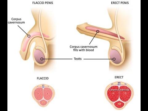 Bagaimana untuk memperbesar penis Anda peregangan