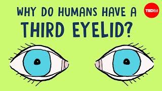 Why do humans have a third eyelid? - Dorsa Amir