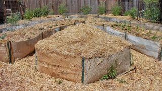 Never Before Seen Footage! Backyard Food Forest Years 1,2 & 3   How it all Began!