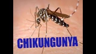 What you need to know about Chikungunya Virus!
