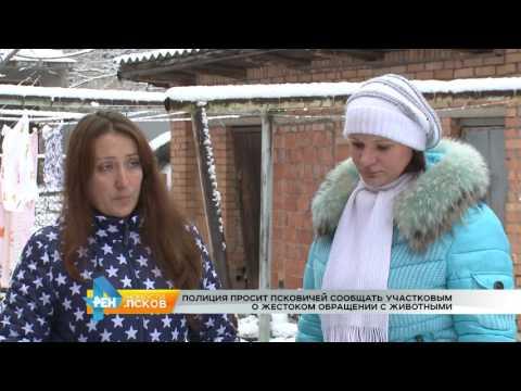 Новости Псков 16.01.2017 # Жестокое обращение с животными