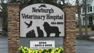preview picture of video 'Welcome to Newburgh Veterinary Hospital'