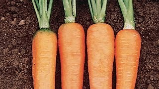 Container Vegetables - Carrots