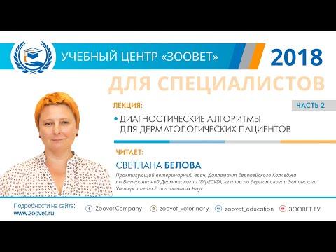 Светлана Белова в УЦ ЗООВЕТ | Дерматология. Часть 2/2