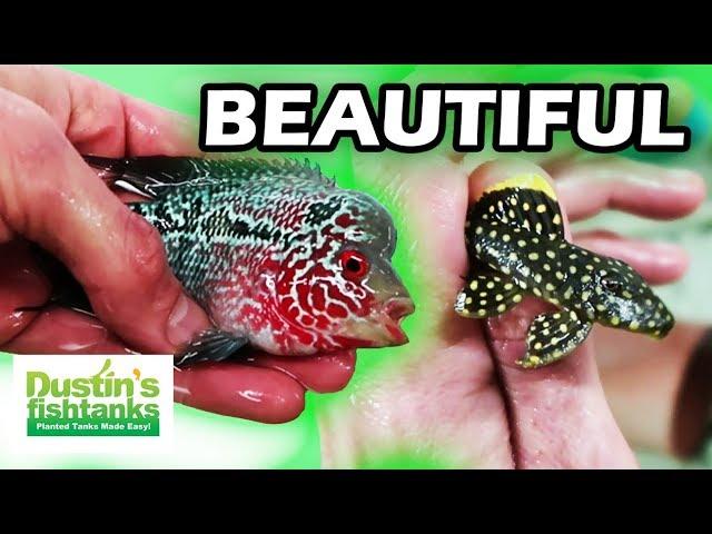 AQUARIUM FISH FARM- SEGREST TROPICAL FISH TOUR WITH SANDY MOORE- Rio Negro Room