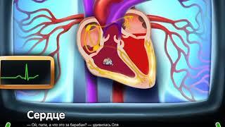 Сердце  Строение сердца   развивающий мультфильм для детей 1