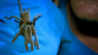 Trying to Catch a Tarantula | Earth Unplugged