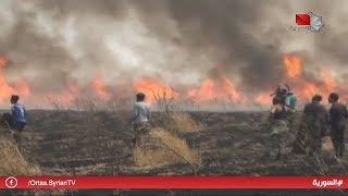الحسكة - جرائم إرهابية تؤدي إلى إحراق أكثر من 400 دونم من المساحات المزروعة بالقمح 20.06.2019