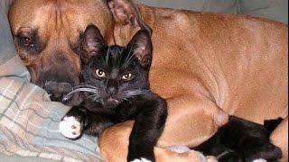 Смешные кошки и собаки | Выпуск # 37