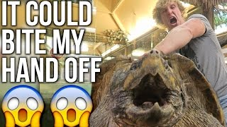 200 POUND ALLIGATOR-SNAPPING TURTLE!