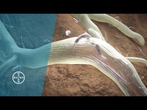 Wermoks das Mittel gegen die Würmer