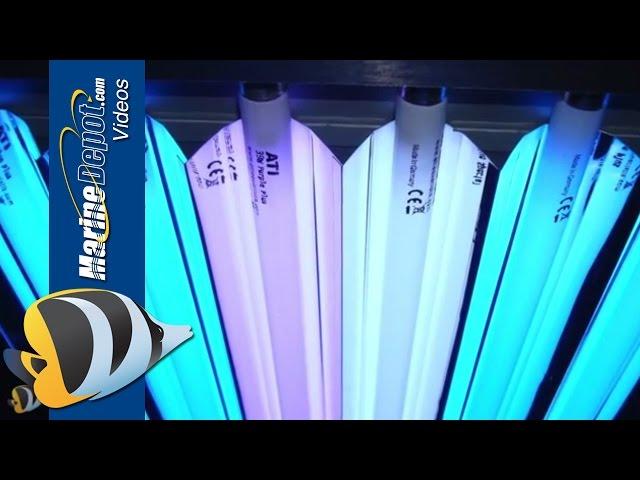 T5HO Fluorescent: Proven Lighting For Your Reef Aquarium