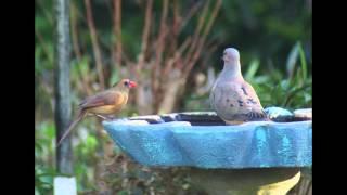 Happy Birdies!